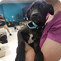 Adopt A Pet :: Tamara - Maple Grove, MN