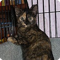 Adopt A Pet :: Mystique - Portland, ME