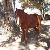 Adopt A Pet :: CJ - Pueblo, CO