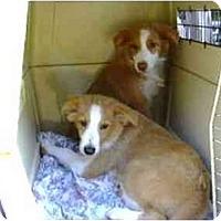 Adopt A Pet :: Tray & Tess - Orlando, FL