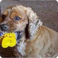 Adopt A Pet :: Dusty - Palmyra, WI