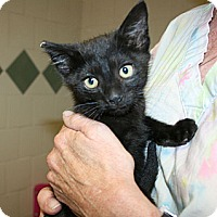 Adopt A Pet :: Lima - Canoga Park, CA