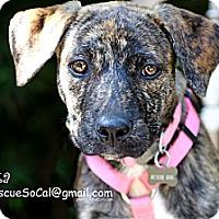 Adopt A Pet :: Alexa - La Habra, CA