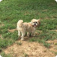 Adopt A Pet :: Wyatt - Providence, RI