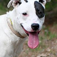 Adopt A Pet :: Lisha - New City, NY