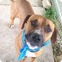 Adopt A Pet :: GRAHAM - Pilot Point, TX