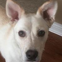 Adopt A Pet :: Mia - Lexington, KY