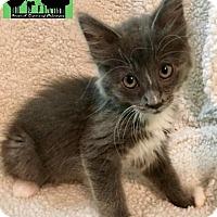 Adopt A Pet :: Diesel - Little Rock, AR