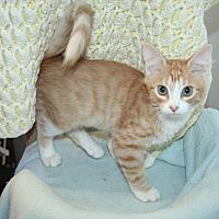 Adopt A Pet :: Marguerita - Santa Rosa, CA