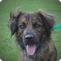 Adopt A Pet :: Hayden - Albany, NY