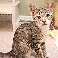 Adopt A Pet :: A..  Ian - Charlotte, NC