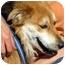 Photo 4 - Australian Shepherd/Shepherd (Unknown Type) Mix Dog for adoption in Los Angeles, California - Meadow