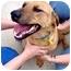 Photo 2 - Hound (Unknown Type) Mix Dog for adoption in Inman, South Carolina - Bentley