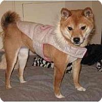 Adopt A Pet :: Sheeba (Nebraska) - Round Lake, IL