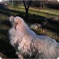 Adopt A Pet :: ASPEN - Wayne, NJ