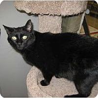 Adopt A Pet :: Cozie - Warminster, PA
