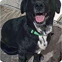 Adopt A Pet :: Sissy - dewey, AZ