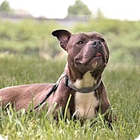 Adopt A Pet :: Creature - Charlotte, NC