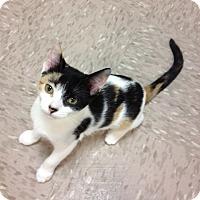 Adopt A Pet :: Tika - Byron Center, MI