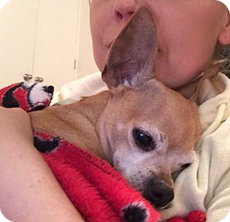 Chihuahua Dog for adoption in Long Beach, New York - Kiki