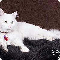 Adopt A Pet :: Aayla - Edmonton, AB