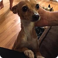 Adopt A Pet :: Colette - Chicago, IL