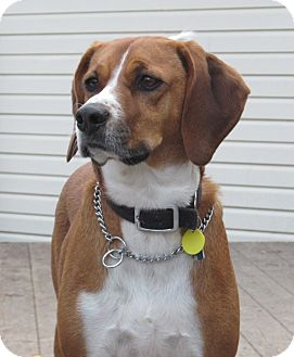 Hound (Unknown Type) Mix Dog for adoption in Owatonna, Minnesota - Ruby