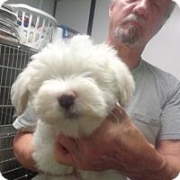 Adopt A Pet :: Sam - Greencastle, NC