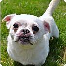 Adopt A Pet :: Smeagol
