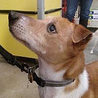 Adopt A Pet :: Marnie - Columbus, OH