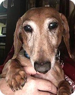 Adopt A Pet :: Cracker Jack  - Marcellus, MI