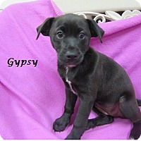 Adopt A Pet :: Gypsy - Bartonsville, PA