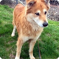 Adopt A Pet :: Gaston - New Canaan, CT