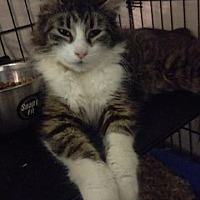 Adopt A Pet :: Camilla - Brainardsville, NY