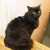 Adopt A Pet :: Raja - Bowie, MD