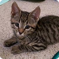 Adopt A Pet :: Edie (and Steve) - Trenton, NJ