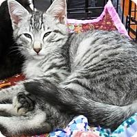 Adopt A Pet :: Ashlie - Castro Valley, CA
