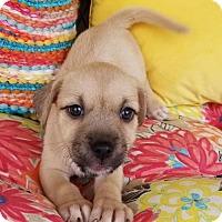 Adopt A Pet :: Chelsea - Scottsboro, AL