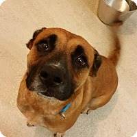 Adopt A Pet :: Britta *CL* - Independence, MO