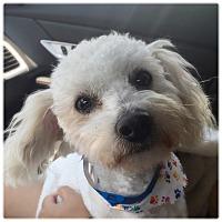 Adopt A Pet :: BAMBOO - Glendale, CA