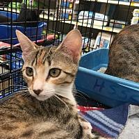 Adopt A Pet :: MISSY - Modesto, CA