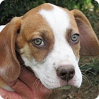 Adopt A Pet :: Marshall - Germantown, MD