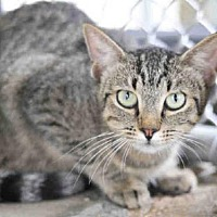 Adopt A Pet :: VIOLET - Tavares, FL
