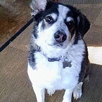 Adopt A Pet :: Finn-Fostered in St. Paul - Ada, MN