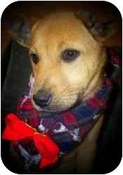 Shepherd (Unknown Type) Mix Puppy for adoption in Old Bridge, New Jersey - Berk