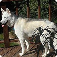 Adopt A Pet :: Lexi - Horsham, PA