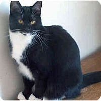 Adopt A Pet :: Tiana - Greenville, SC
