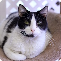 Adopt A Pet :: Moobalu - Chicago, IL