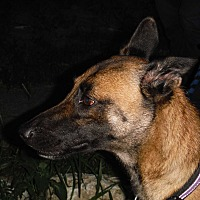 Adopt A Pet :: ELLE - SAN ANTONIO, TX