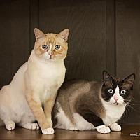 Adopt A Pet :: Jinx & Mojo - Manhattan, KS